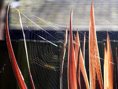 october-web
