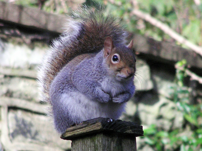 squirrel070214-01