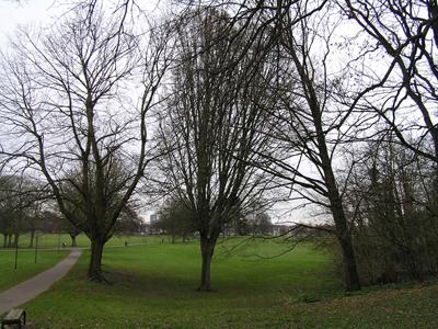 180314-tree-01