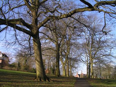 trees250214-24