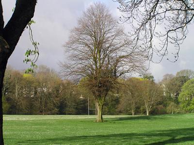 090414-trees-16