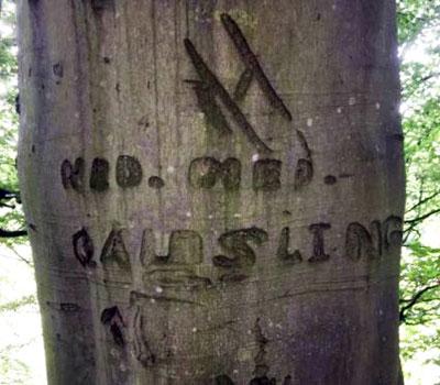 tree-engraved